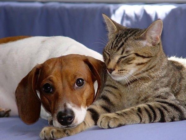 fonds d'ecran chien et chat